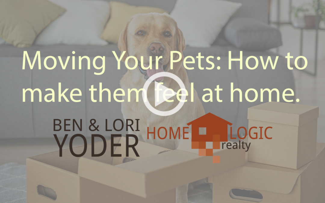 Moving Your Pets: How to make them feel at home.